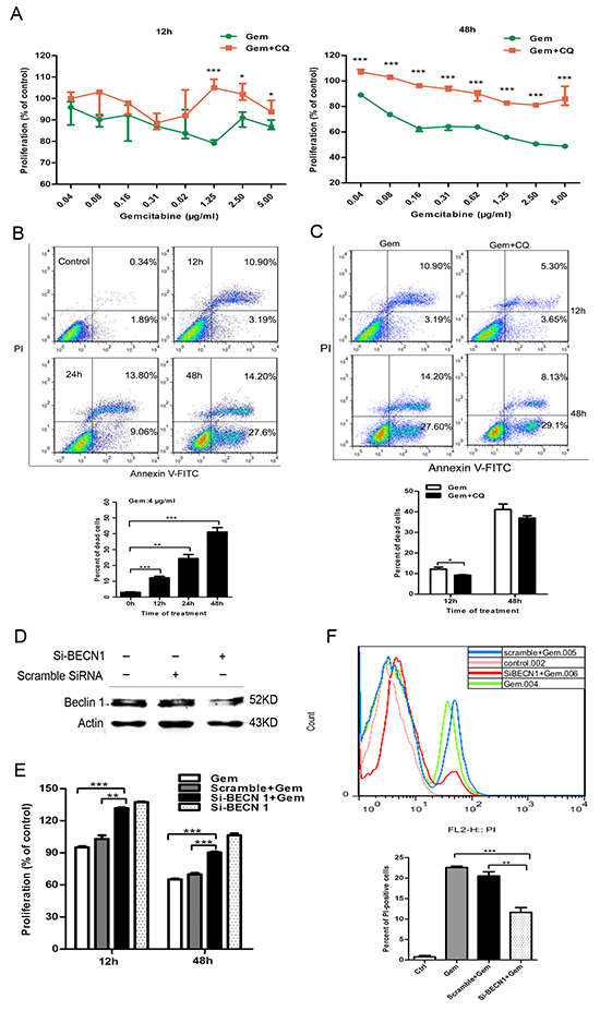 Inhibition of autophagy by CQ and si-BECN1 attenuated the cytotoxicity of gemcitabine in ER-positive MCF-7 cells.