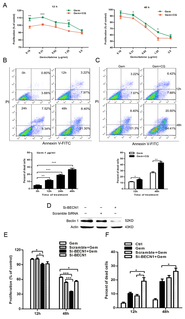 Inhibition of autophagy by CQ and si-BECN1 enhanced the cytotoxicity of gemcitabine in ER-negative MDA-MB-231 cells.