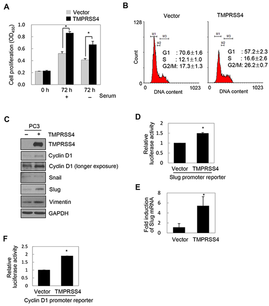 TMPRSS4 induced proliferation and upregulated Slug and cyclin D1.