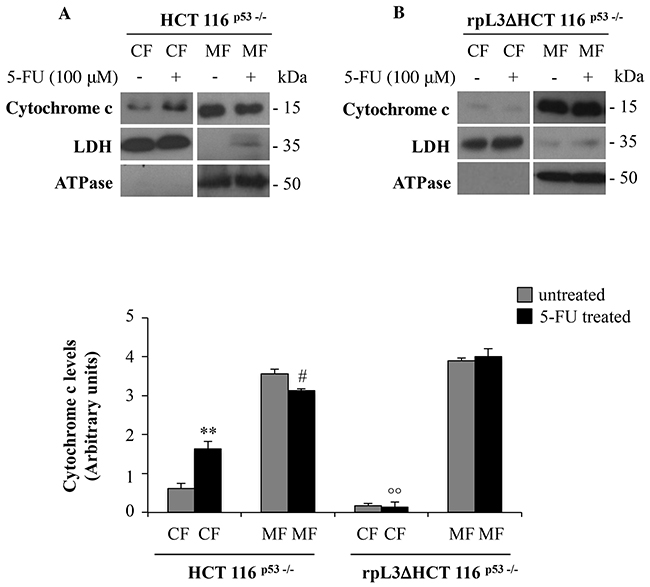 rpL3 translocation upon 5-FU treatment mediates the release of cytochrome c from mitochondria.