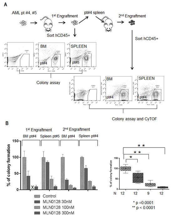 MLN0128 inhibits the function of AML-derived xenograft leukemic cells carrying FLT3 mutation.