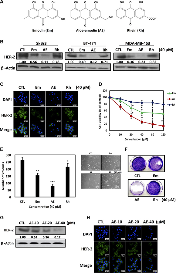 Effect of emodin, aloe-emodin and rhein on HER-2 expression in HER-2-overexpressing breast cancer cells.
