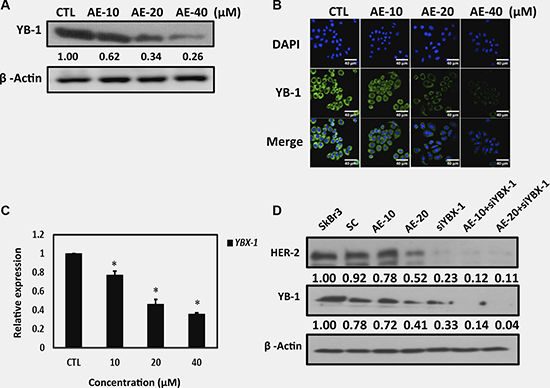Aloe-emodin suppressed oncoprotein YB-1 expression in HER-2-overexpressing breast cancer cells.