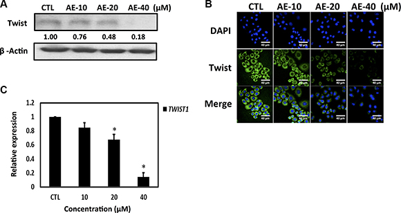 Aloe-emodin inhibited Twist expression in SkBr3 cells.