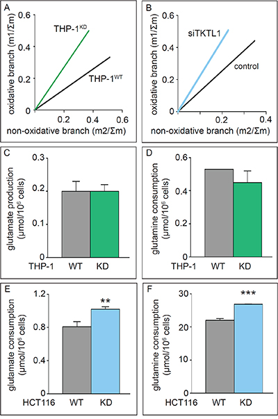 Effects of TKTL1 silencing on PPP unbalance and glutamine metabolism.