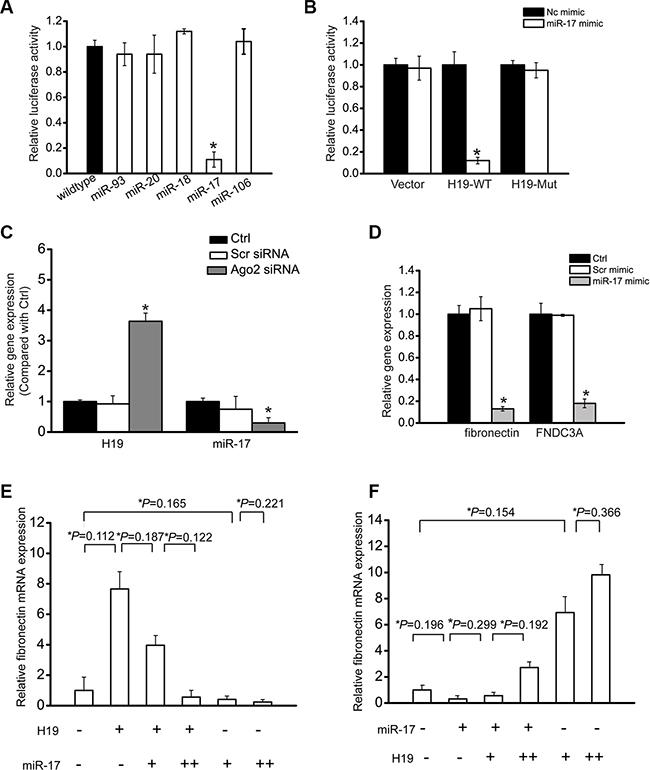 LncRNA-H19 functions as miR-17 sponge in renal cells