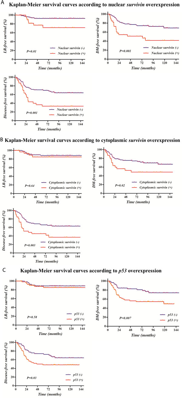 Kaplan-Meier survival curves according to survivin or p53 overexpression: Survival rates were significantly related with the overexpression of nuclear