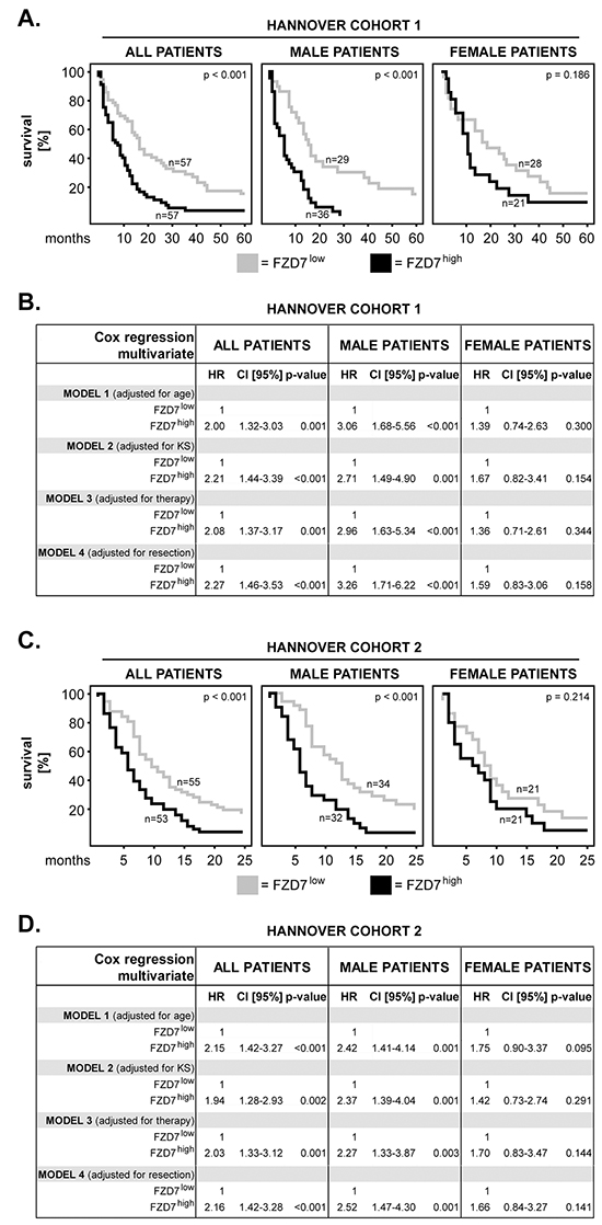 FZD7 in primary GBM: impact on patients' overall survival and sex differences.
