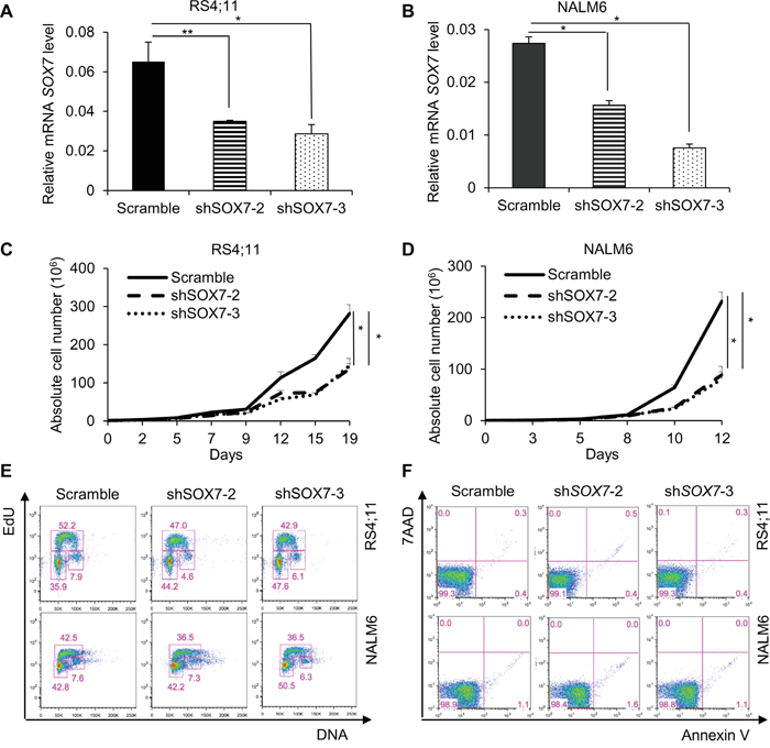 The down-regulation of SOX7 expression in BCP-ALL cells induces a significant decrease in proliferation.