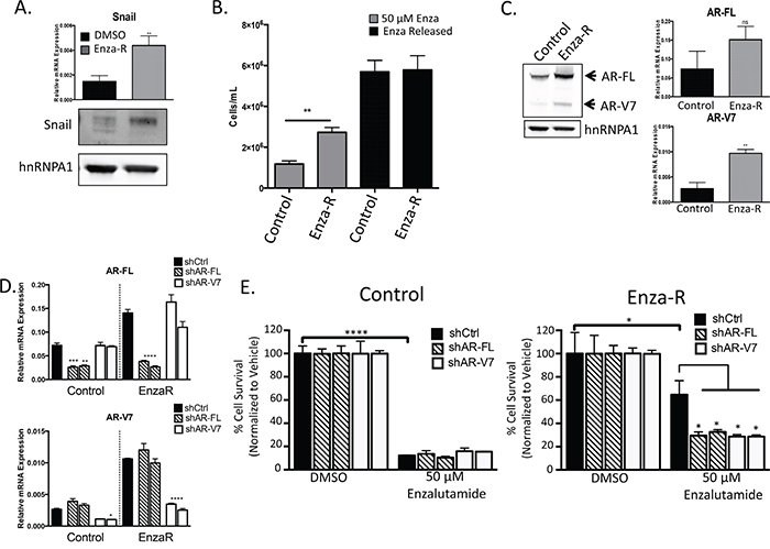 Enzalutamide resistance is mediated through increased expression of AR and AR-V7.
