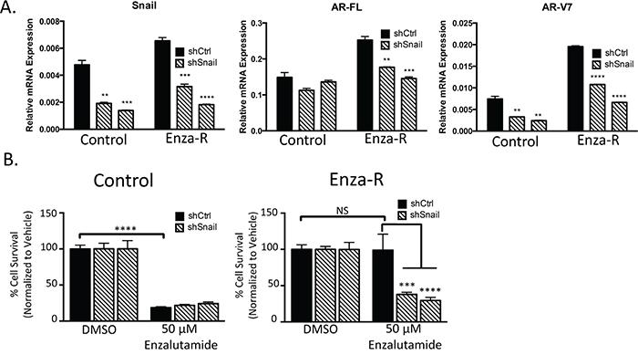 Snail upregulation mediates AR upregulation and enzalutamide resistance.