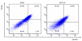 Flow cytometry of colon cancer cells using fluorescence anti-CD44s Ab and anti-CD44v9 Ab.
