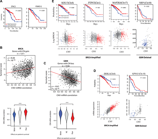 Analysis of the effect of CR-high and CR-low genes' expression on clinical outcome. (A
