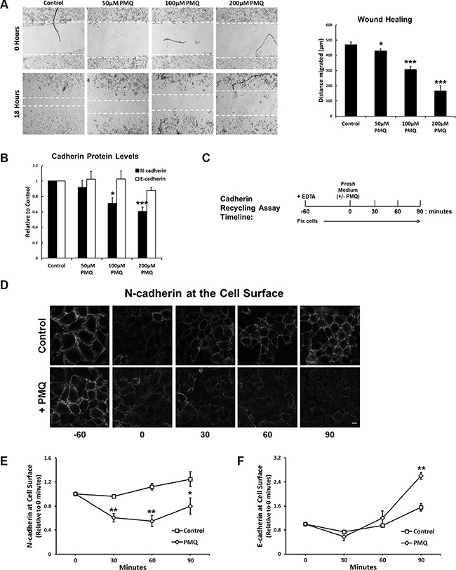 The endosomal recycling inhibitor primaquine mimics RCP knockdown.