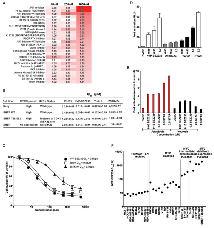 Identification of PI3K/mTOR inhibitors that selectively target MYCN-expressing tumor cells.