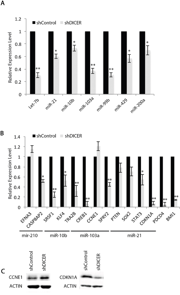 Expression of specific mRNAs do not correlate with their targeting miRNA expression profiles in GSCs.