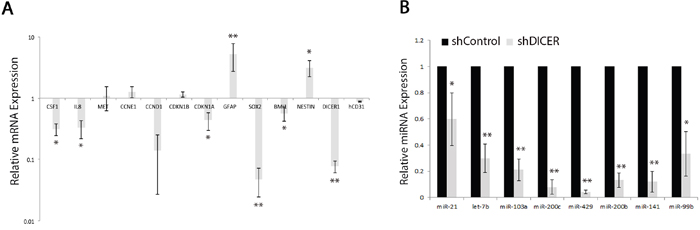 Analysis of specific miRNA and mRNA expression profiles in shDICER and shControl tumors.