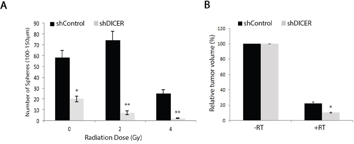 DICER knockdown increases sensitivity of GSCs and their resulting tumors to radiation treatment.