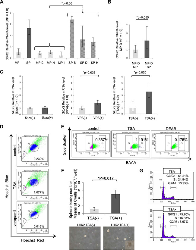 SOX2 expression and stemness are regulated by class I HDAC.