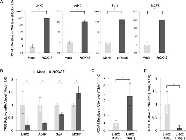 HOXA5 repress TP53 expression in lung cancer.