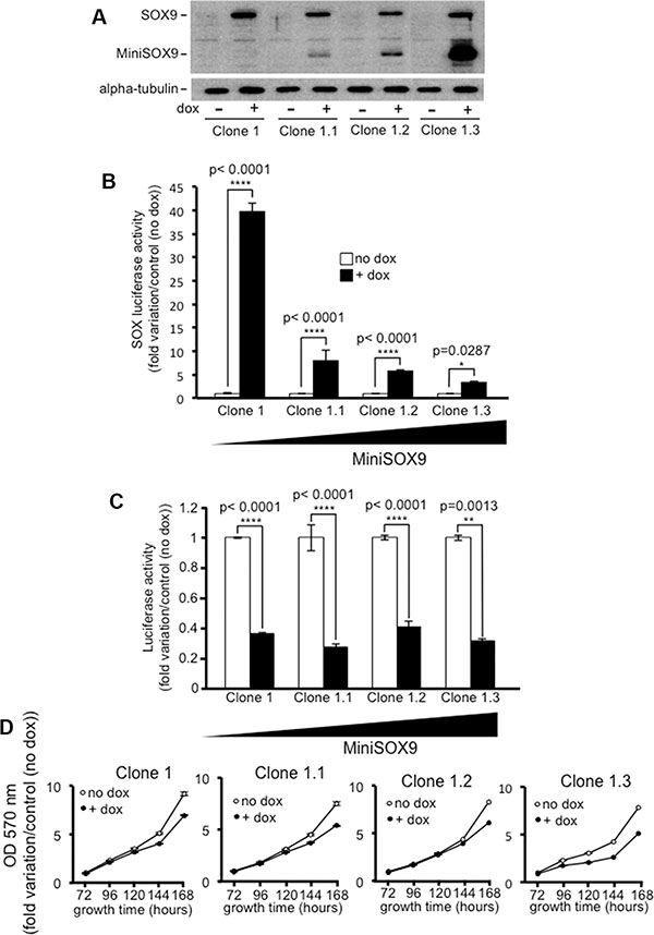 The inhibition of the Wnt/ß-catenin signaling does not require SOX9 transcription factor activity.