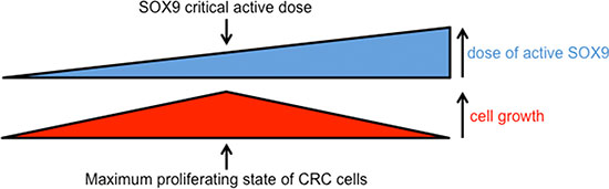 Scheme summarizing the impact of active SOX9 variations on CRC cell growth.