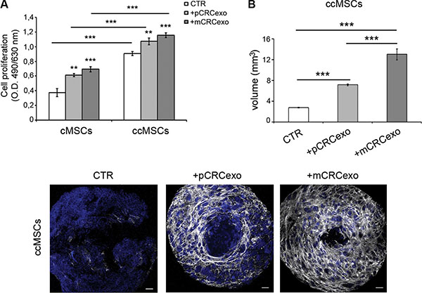 Colorectal cancer exosomes induce the umbilicated spheroids formation in ccMSCs.