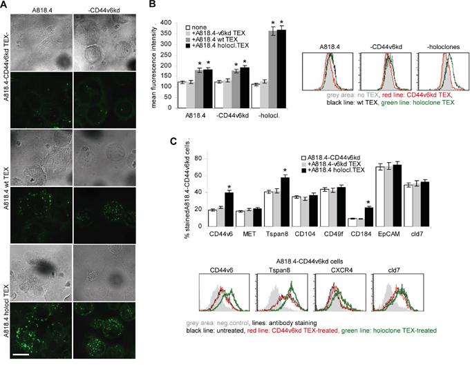The impact of CD44v6 on TEX uptake.