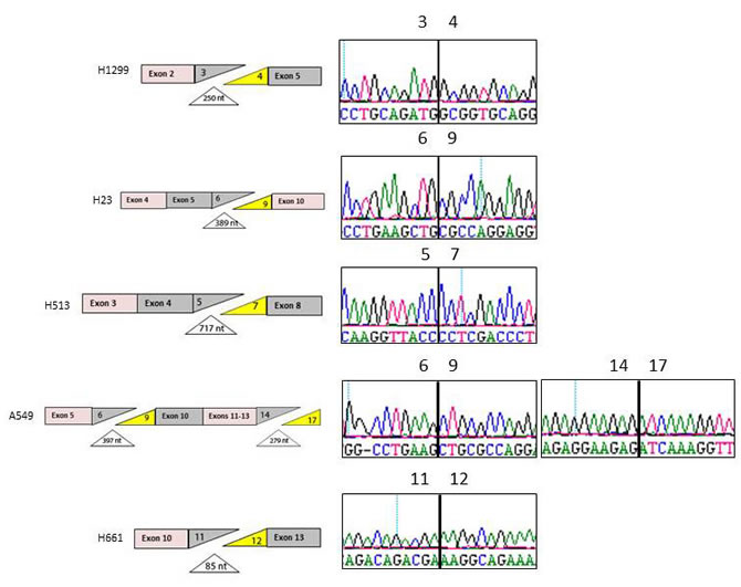 Splicing Defects in BRG1-negative Cell Lines.