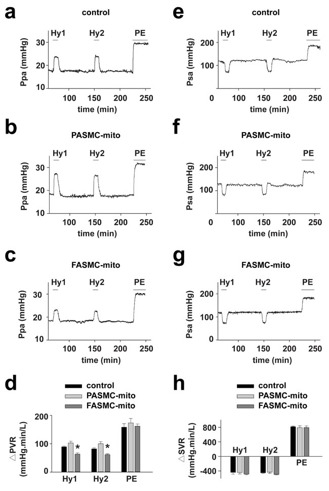 Attenuation of acute hypoxia-induced pulmonary vasoconstriction in rats by transplanted mitochondria via intravenous injection.