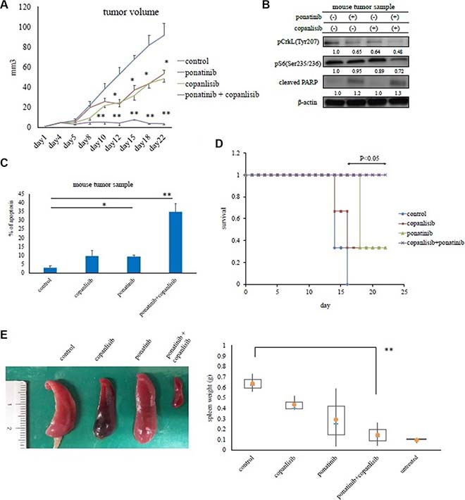 Effects of copanlisib and ponatinib on Ba/F3 T315I cell proliferation in a mouse model.
