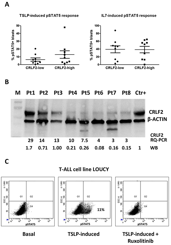 TSLP-induced pSTAT5 response and intracellular expression of CRLF2.