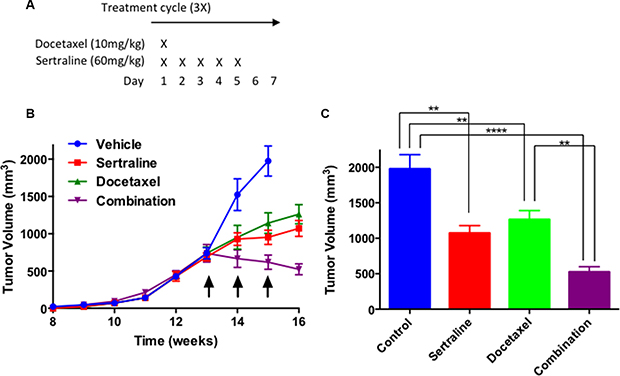 In combination sertraline and docetaxel inhibit tumor growth to a greater extent than either drug individually.
