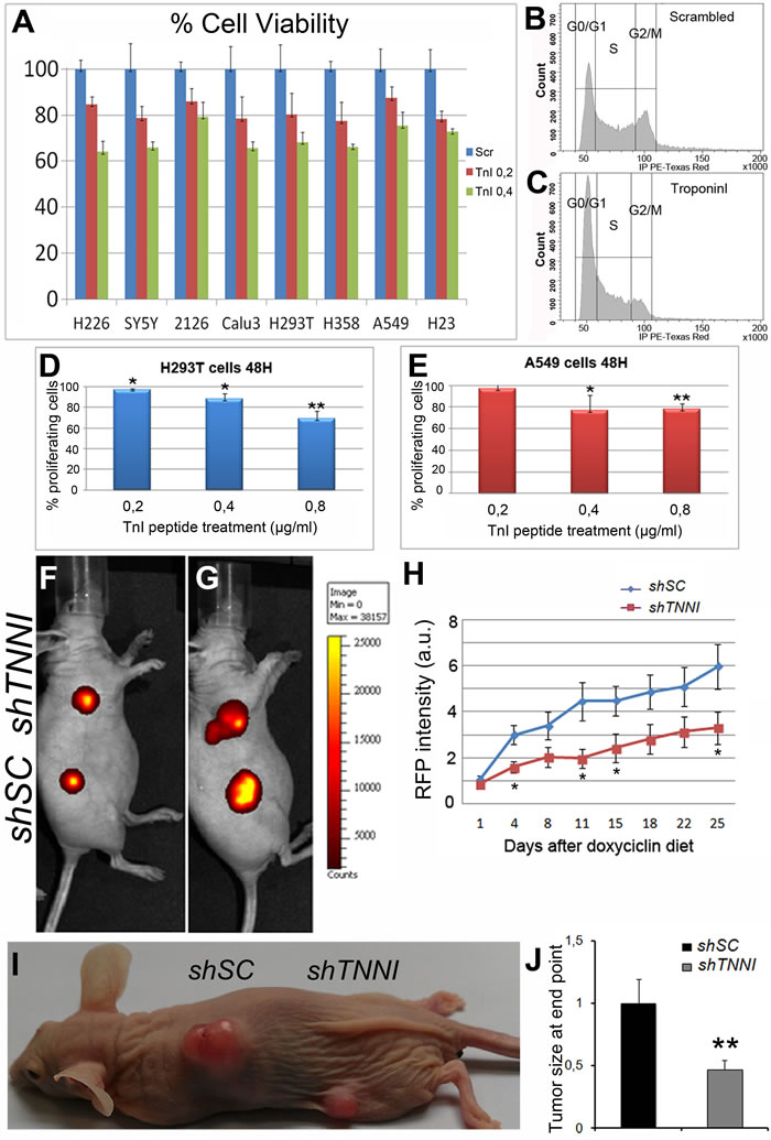 Human tumor growth can be reduced by