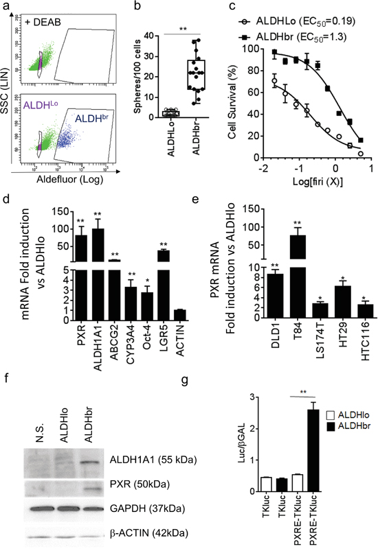 PXR expression is increased in colorectal ALDHbr CSCs.