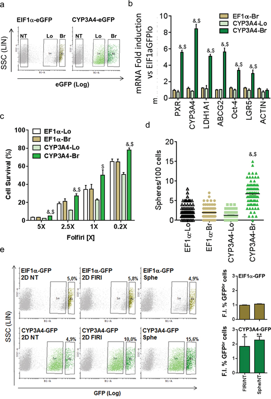 PXR transcriptional activity marks chemoresistant CSCs.