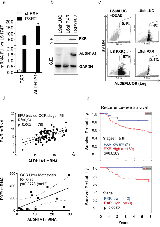 PXR mRNA expression correlates with ALDH1A1 expression and is a poor prognosis factor in colon cancer patients.