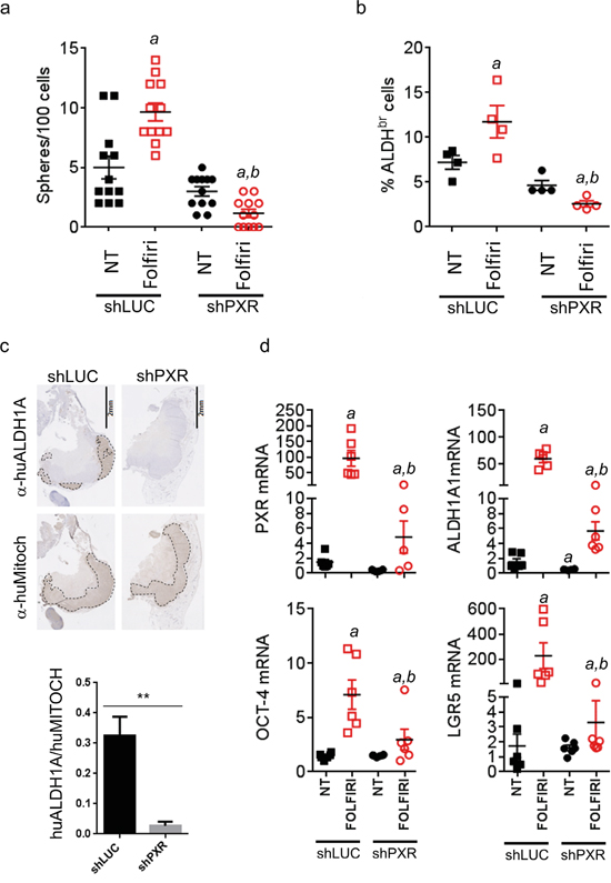 PXR depletion impairs chemotherapy-induced enrichment of PXR and CSC markers in vivo.