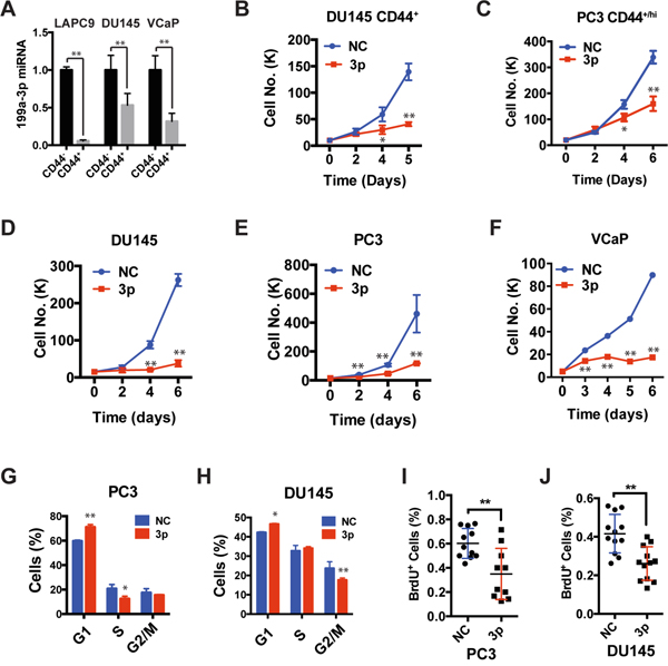 Expression of miR-199a-3p inhibits cell proliferation.