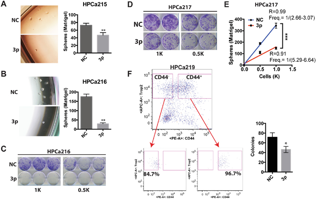 miR-199a-3p inhibits clonal and clonogenic properties of HPCa cells.