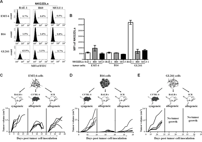 NKG2DL expression and allogeneic tumor formation of EMT-6, B16 and GL261 cells.