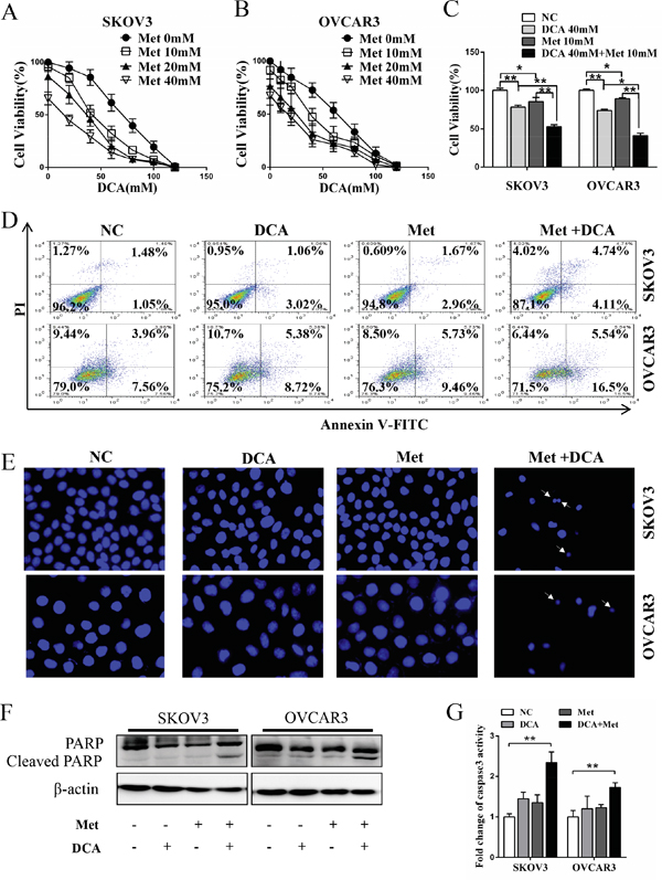 Dichloroacetate (DCA) and metformin (Met) synergistically induce apoptosis in ovarian cancer cells.