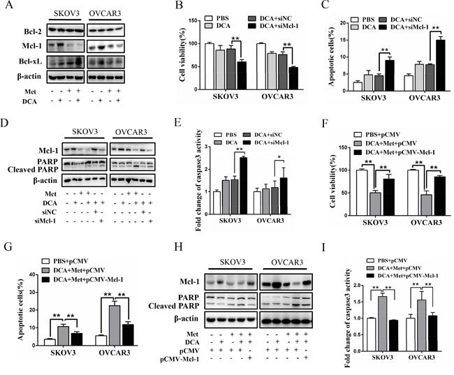 Met sensitizes DCA through decreasing DCA-induced Mcl-1.