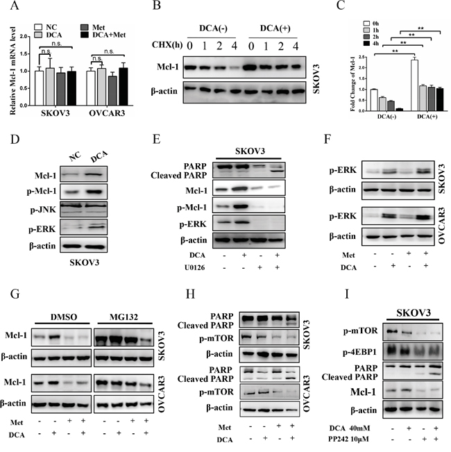 Met attenuates DCA-induced Mcl-1 through inhibiting Mcl-1 translation.