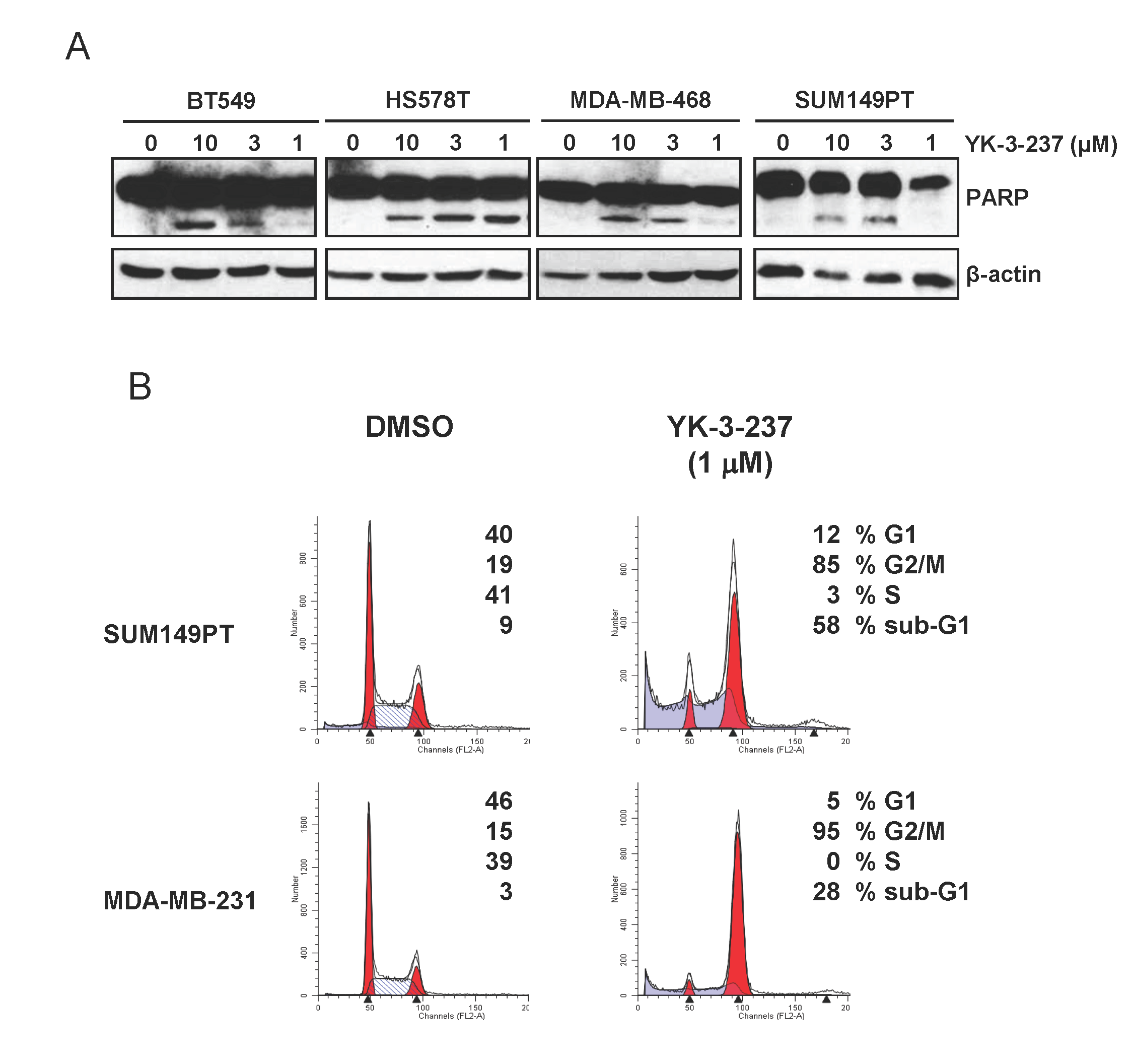 Induction of apoptotic cell death and G2/M arrest by YK-3-237 in TNBC cell lines.