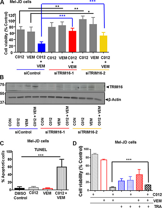 TRIM16 is partially required for combination of C012 and vemurafenib reduction in cell viability.