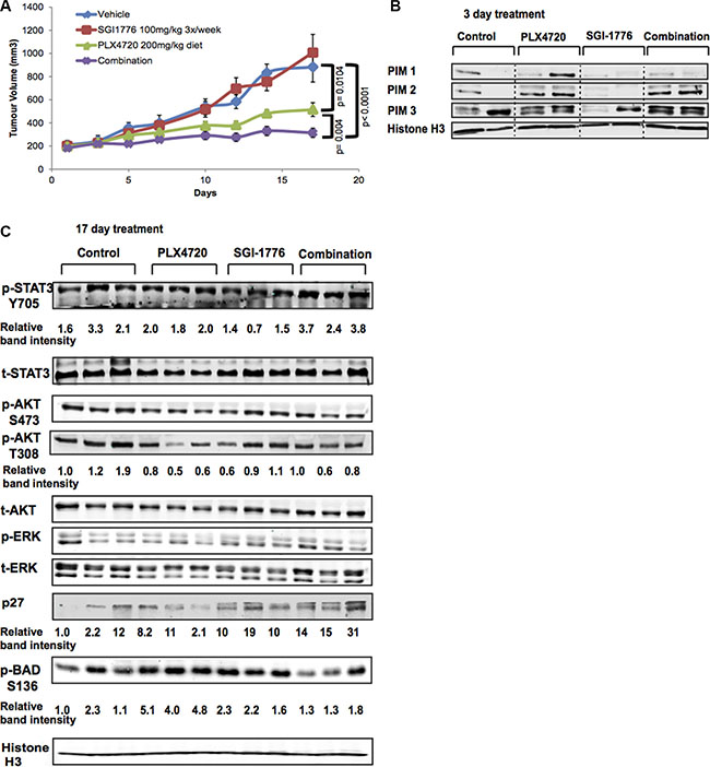 SGI-1776 displays anti-tumor activity in combination with a BRAF inhibitor in vivo.