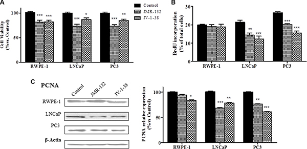 Effect of GHRH antagonists, JMR-132 and JV-1-38, (0.1 μM) on cell viability (A), cell proliferation (B) and expression of PCNA in RWPE-1, LNCaP and PC3 cells.