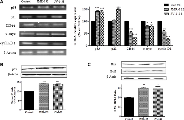 Analysis of p53, p21, CD44, c-myc and cyclin D1 mRNA levels (A) and p53 (B), Bax and Bcl-2 (C) protein levels after treatment with 0.1 μM of GHRH antagonists at 30 min (A), 60 min (B), and 2 h (C) respectively, in PC3 cells.