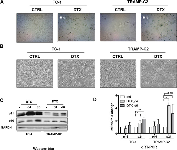 Oncotarget Tumor Growth Accelerated By Chemotherapy Induced